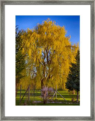 Golden Willow Tree Framed Print by Omaste Witkowski