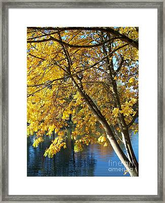 Golden Zen Framed Print by Chalet Roome-Rigdon