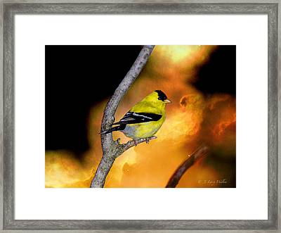Goldfinch At The Edge Of The Abyss Framed Print by J Larry Walker
