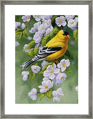 Goldfinch Blossoms Greeting Card 1 Framed Print by Crista Forest