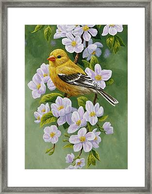 Goldfinch Blossoms Greeting Card 2 Framed Print by Crista Forest