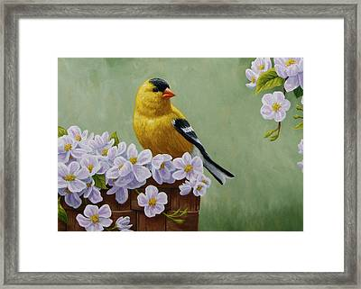 Goldfinch Blossoms Greeting Card 3 Framed Print by Crista Forest