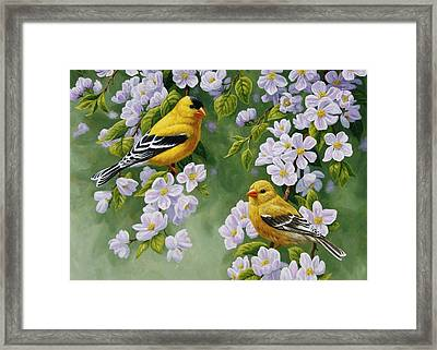 Goldfinch Blossoms Greeting Card 4 Framed Print by Crista Forest