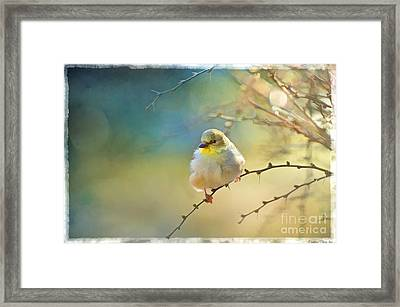 Goldfinch In Morning Light - Digital Paint I  Framed Print by Debbie Portwood