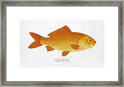 Goldfish Framed Print by Aged Pixel