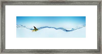 Goldfish Wearing Shark Fin Framed Print by Panoramic Images