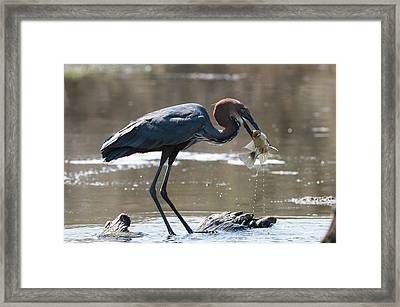 Goliath #1 Framed Print by Andy-Kim Moeller