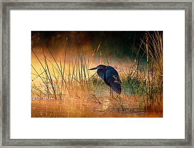 Goliath Heron With Sunrise Over Misty River Framed Print by Johan Swanepoel