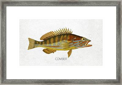 Comber Framed Print by Aged Pixel