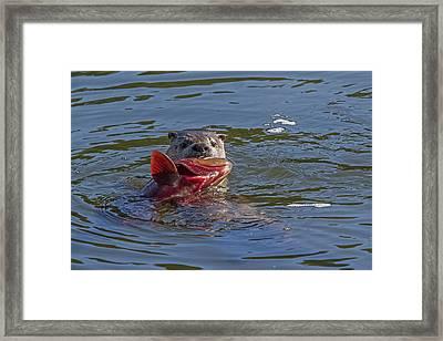 Gone Fishin' Framed Print by Sandy Sisti