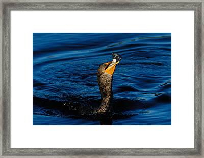 Gone Fishing Framed Print by Stefan Carpenter