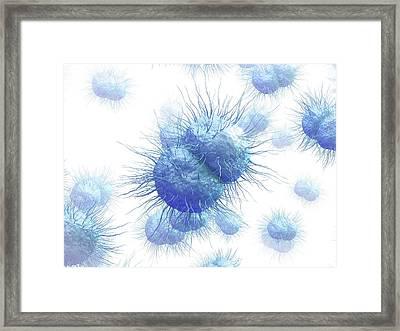 Gonorrhoea Bacteria Framed Print by Maurizio De Angelis