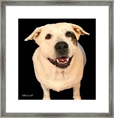 Good Dog Framed Print by Bellesouth Studio