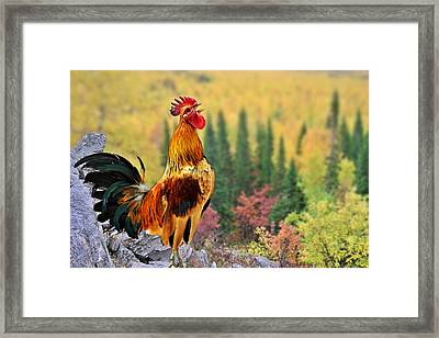 Good Morning America Framed Print by Christine Till