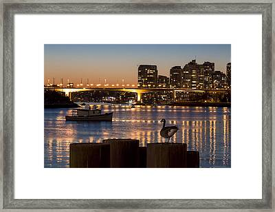 Goose Necking Framed Print by Michael Thornquist