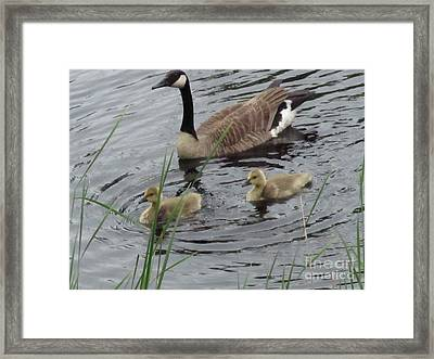 Goose Plus Two Framed Print by Denise White