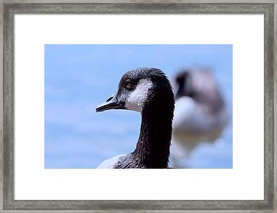 Goose Portrait Framed Print by Lesa Fine