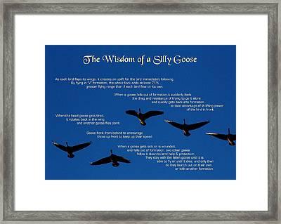 Goose Wisdom Framed Print by Mike Flynn