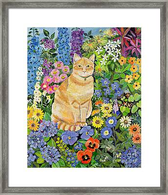 Gordon S Cat Framed Print by Hilary Jones