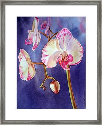 Gorgeous Orchid Framed Print by Irina Sztukowski