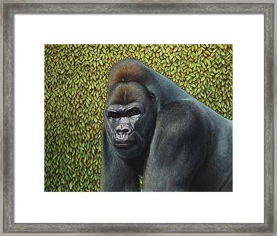 Gorilla With A Hedge Framed Print by James W Johnson