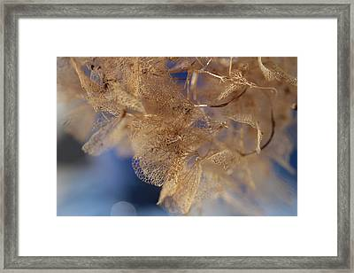 Gossamer Framed Print by Connie Handscomb