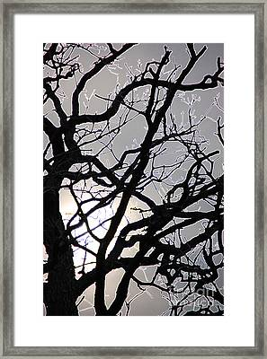 Goth Tree Framed Print by First Star Art