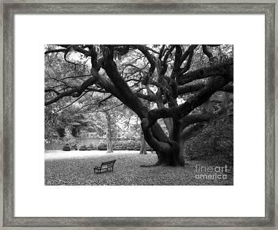 Gothic Surreal Black And White South Carolina Angel Oak Trees Park Landscape Framed Print by Kathy Fornal