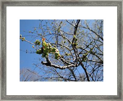 Gotta Start Somewhere Framed Print by Suzanne Perry