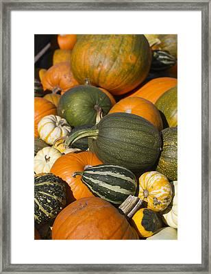 Gourds Framed Print by Rebecca Cozart
