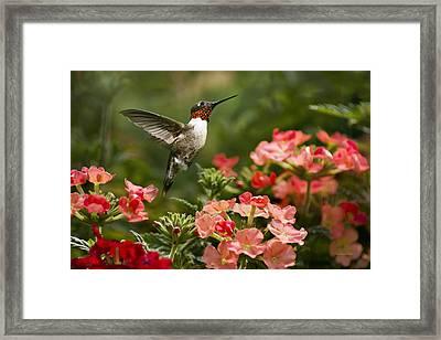 Graceful Garden Jewel Framed Print by Christina Rollo