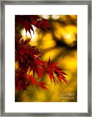 Graceful Leaves Framed Print by Mike Reid