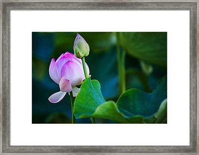 Graceful Lotus. Pamplemousses Botanical Garden. Mauritius Framed Print by Jenny Rainbow