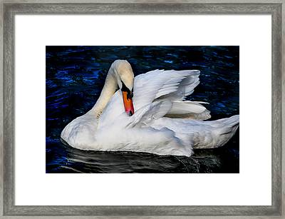Graceful Swan In The Blue Water Framed Print by Jenny Rainbow