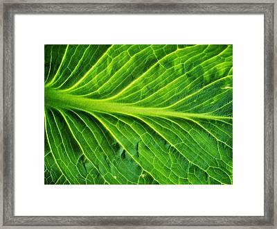 Graceful Framed Print by Tom Druin