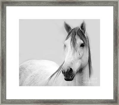 Gracie Grey Framed Print by Lynda Dawson-Youngclaus