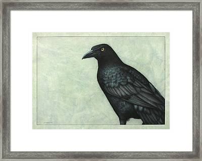 Grackle Framed Print by James W Johnson