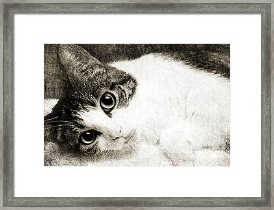 Grammy Said I Could Bw Framed Print by Andee Design