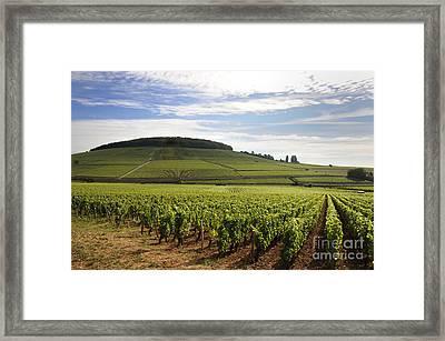 Grand Cru And Premier Cru Vineyards Of Aloxe Corton. Cote De Beaune. Burgundy. Framed Print by Bernard Jaubert