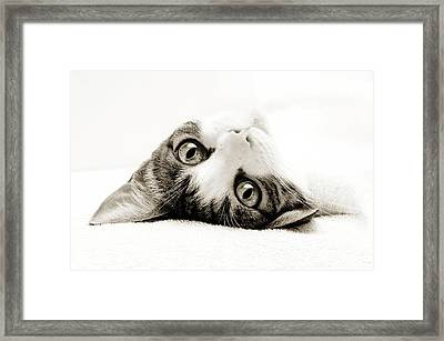 Grand Kitty Cuteness Bw Framed Print by Andee Design