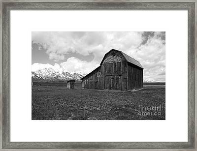 Grand Teton National Park Barn On Mormon Row Black And White Framed Print by Shawn O'Brien