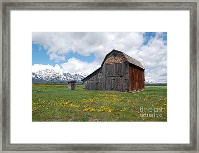 Grand Teton National Park Barn On Mormon Row Framed Print by Shawn O'Brien
