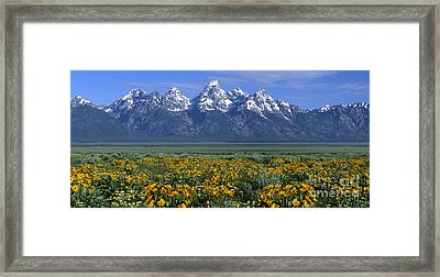 Grand Teton Summer Framed Print by Sandra Bronstein
