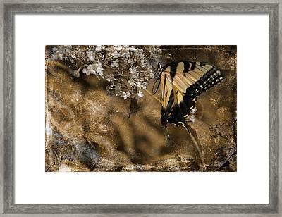 Grandma's Butterfly Framed Print by EricaMaxine  Price