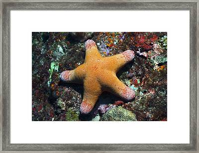 Granulated Seastar Framed Print by Science Photo Library