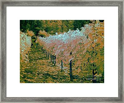 Grape Harvest, Umbria, Italy Framed Print by Tim Holt