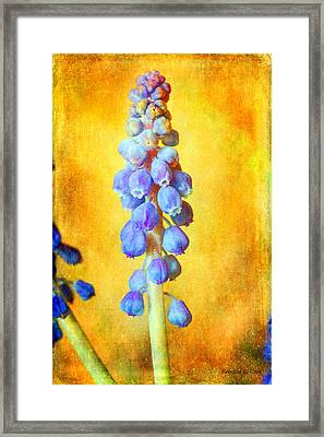 Blue Grapes Framed Print featuring the mixed media Grape Hyacinth by Bellesouth Studio