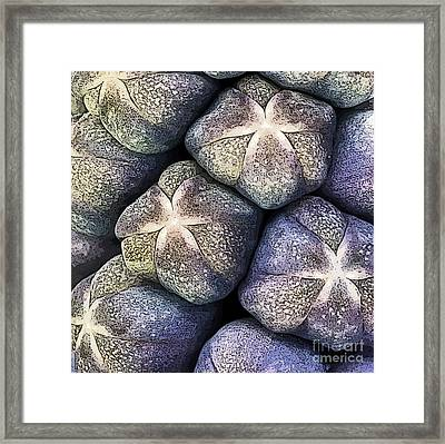 Grape Hyacinth Detail Framed Print by Jane Rix