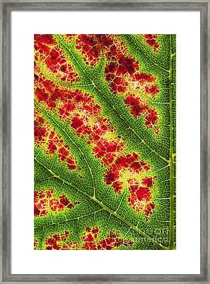 Grape Leaf Pattern Framed Print by Tim Gainey