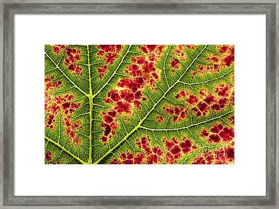Grape Leaf Texture Framed Print by Tim Gainey